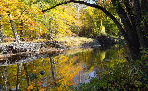 Pennypack Creek